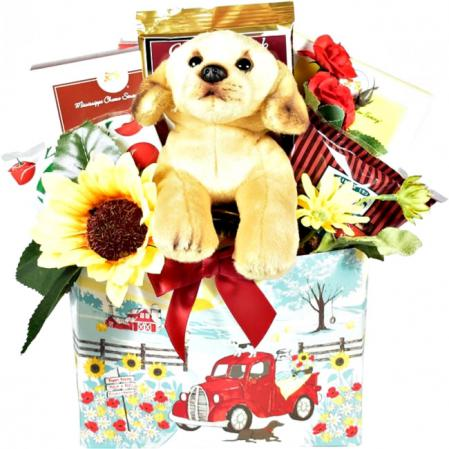 dogs days gift baskets